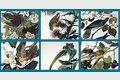 Audubon Close Up - Birds and Flowers 1.0