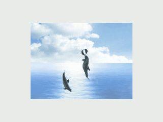 Schön animierter Screensaver mit Delphinen die im Wasser spielen