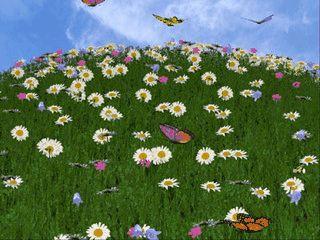 EIne Blumenwiese mit fliegenden Schmetterlingen und Bienen.
