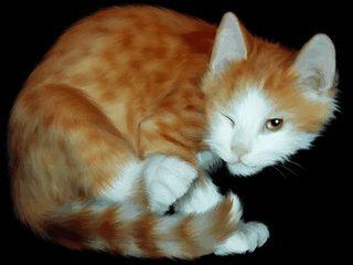 Bilder von gezeichneten Katzen schonen Ihren Bildschirm.
