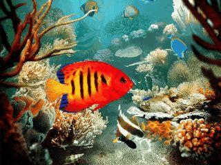 Toller 3D Screensaver einer virtuellen Unterwasserwelt.