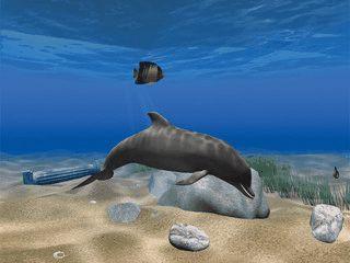 Ein Delphin schwimmt unter Wasser.