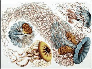 Über 40 Bilder des Zoologen Ernst Haeckel als Bildschirmschoner