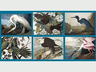 Handgezeichnete Vogelbilder als Slideshow
