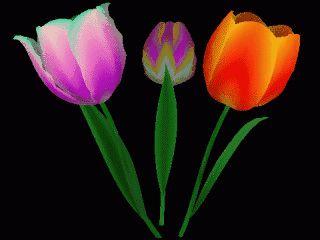 Drei Blumen in 3D rotieren auf Ihrem Desktop