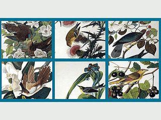 Handgezeichnete Bilder von Vögeln schonen den Bildschirm