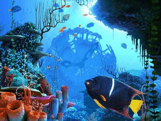 Eine Unterwasserwelt offenbart ihre Geheimnisse.