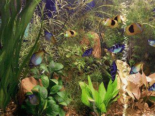 Sehr realistischer Aquarium Screensaver. Benötigt OpenGL Grafikkarte.
