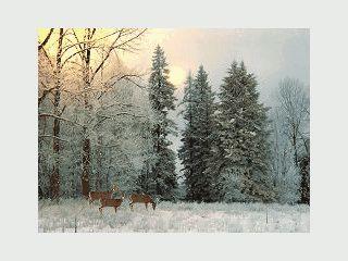 Animierte Schneelandschaften als Bildschirmschoner.