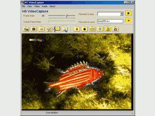 Videodaten einer Videokarte aufnehmen und als AVI Datei speichern.