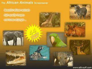 Verschiedene Bilder mit Tieren des afrikanischen Continents