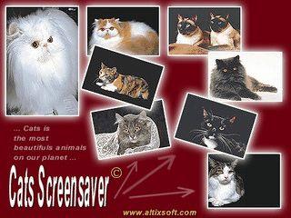 45 verschiedene Bilder von Hauskatzen zeigt dieser Bildschirmschoner.