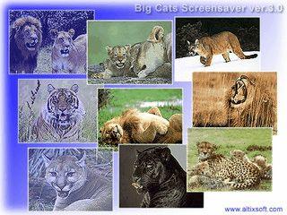 50 verschiedene Bilder von Wildkatzen als Bildschirmschoner.