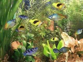 Bildschirmschoner der ein fotorealistisches 3D Aquarium auf den Mac zaubert.