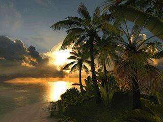 Ein karibischer Strand mit Palmensilouetten beim Sonnenuntergang.