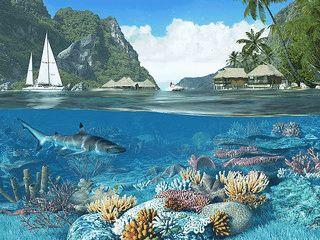 Entspannung und Taucherlebnisse im tropischen Paradies.