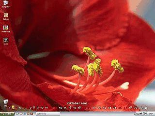 Desktopkalender und Bildschirmschoner mit Blumenmotiven
