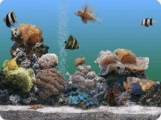 Fotorealistischer 3D Bildschirmschoner mit 26 verschiedenen Fischarten.