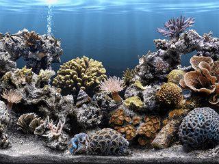 Ein schön anzusehendes Aquarium als Bildschirmschoner